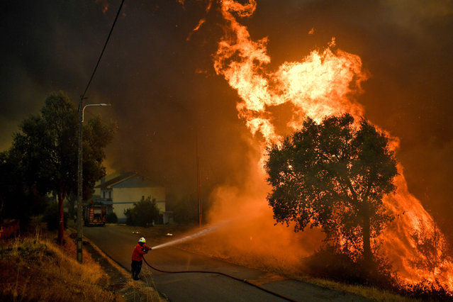 A firefighter tackles a wildfire close to the village of Pucarica in Abrantes on August 10, 2017. Nearly 3,000 firefighters battled 80 wildfires raging across Portugal civil protection officials said, as the return of scorching heat put an end to the respite after a spate of blazes. Some 650 firefighters backed by nine water-dropping aircraft and over 200 vehicles were at the scene of the biggest blaze in a forest near the central town of Abrantes. (Photo by Patricia de Melo Moreira/AFP Photo)