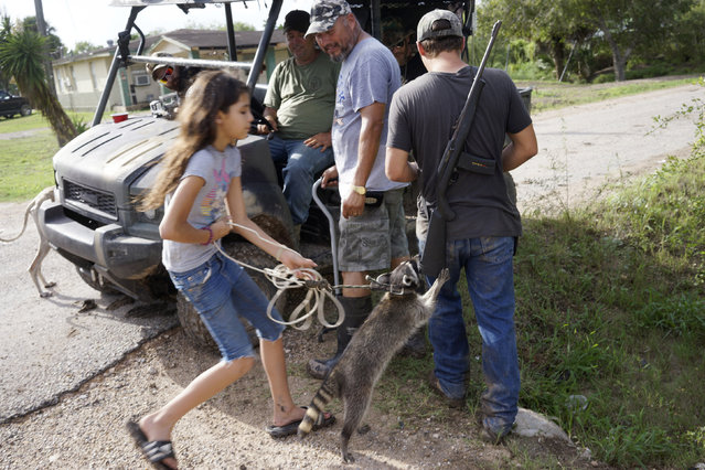Fernando Rivera Jr. (C) looks at a neigbour's pet raccoon jumping up onto his son Fernando Rivera III's rifle (R) as a group of patriots patrolling in a UTV look on outside their home in Brownsville, Texas September 2, 2014. (Photo by Rick Wilking/Reuters)