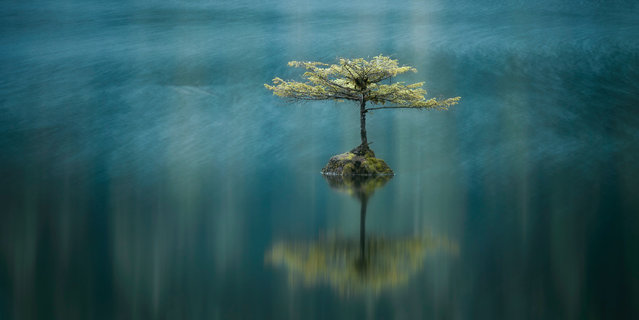 """""""Temperate Breeze"""". Third place in the Carolyn Mitchum awards went to this image of Port Renfrew, British Columbia, Canada. (Photo by Adam Gibbs/Epson International Pano Awards 2017)"""