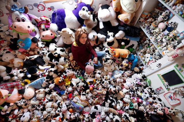 French Model Emeline Duhautoy poses with her collection of 1,679 stuffed toy cows she has been collecting for over seven years at her home in Saint-Omer, northern France, March 12, 2017. (Photo by Charles Platiau/Reuters)
