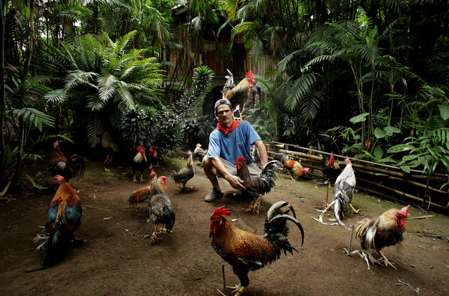 """Martin Herrera, 58, who has had a love for roosters since his childhood, and has spent the last 20 years domesticating and training them, poses with his favorite rooster """"Paquito"""" around other roosters in his house in San Jose, Costa Rica April 27, 2017. (Photo by Juan Carlos Ulate/Reuters)"""