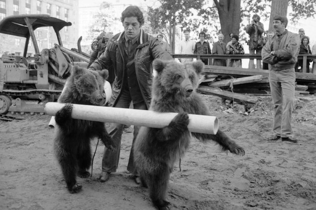 Two Russian bears give subway construction workers a paw (hand) as they stump for publicity in Washington, Friday, December 5, 1975. The Soviet Circus opens in the nation's capital. (Photo by AP Photo)