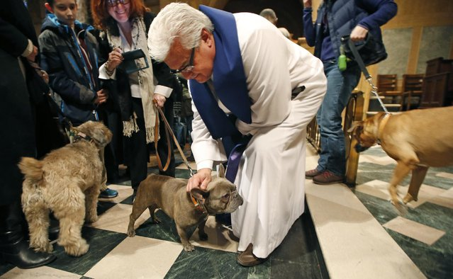 Senior Minister Stephenm Bauman blesses a dog during the 6th annual Blessing of the Animals at Christ Church of Manhattan in New York, Sunday, December 7, 2014. (Photo by Kathy Willens/AP Photo)