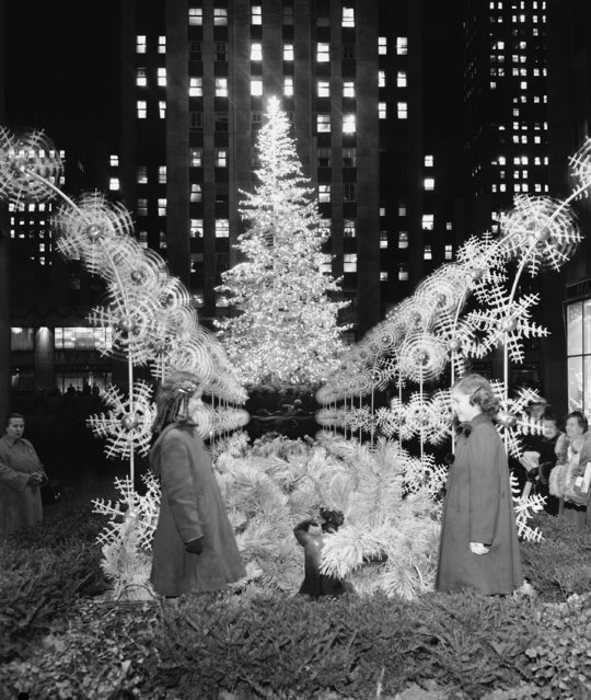 A silver-sprayed 75-foot high Norway spruce sparkles after its 7,500 bulbs were lighted for the first time in Rockefeller Center, December 9, 1949 in New York. At the same time, flood lights from buildings in the center were beamed onto the promenade where 48-spray-like metal plumes, erected in the promenade, held pin-wheels designed as snow flakes. (Photo by Tom Fitzsimmons/AP Photo)