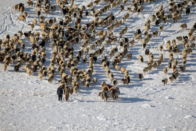 Shepherds, who set off with their herds 15 days ago, were suddenly caught by the snow and blizzard that was suppressed at the Kurubas Pass at an altitude of 2 thousand 225 meters, in Van province of Turkey on December 10, 2020. Shepherds in the Baskale distric had a hard time bringing their sheep from the highland to the city center due to the snow and blizzard. (Photo by Ozkan Bilgin/Anadolu Agency via Getty Images)