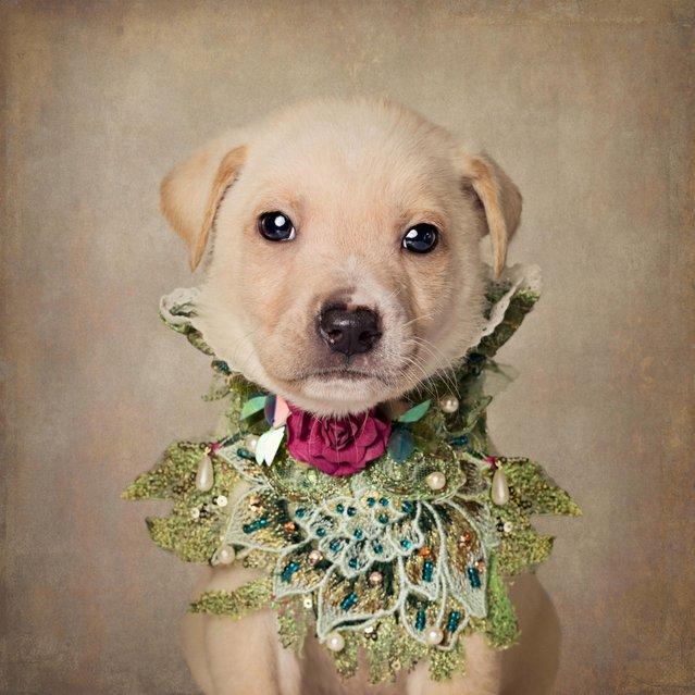 A puppy in a glamorous next piece, taken in El Dorado, Arkansas, December 2016. (Photo by Tammy Swarek/Barcroft Images)