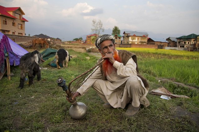 Shafi Khan, a Bakarwal nomad, smokes a hookah outside a temporary shelter on the outskirts of Srinagar, Indian controlled Kashmir, Tuesday, April 21, 2015. (Photo by Dar Yasin/AP Photo)