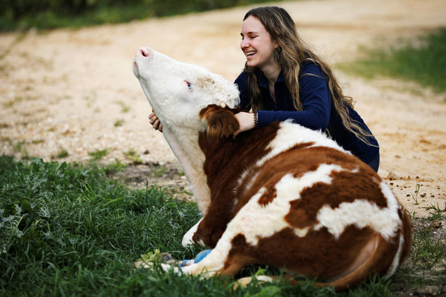 "A volunteer hugs Nir, a cow fitted with prosthetic leg at ""Freedom Farm"", which serves as a refuge for mostly disabled animals in Moshav Olesh, Israel on March 7, 2019. (Photo by Nir Elias/Reuters)"