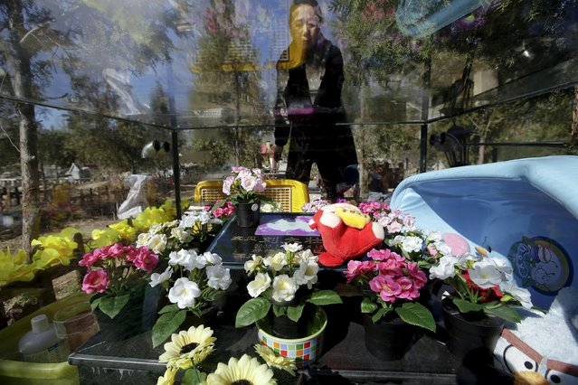 Pet owner Ma Ying cleans the glass covering her dog Liu Dazhuang's tomb, with bathtub, dolls and decoration flowers placed inside, ahead of the Qingming Festival at Baifu pet cemetery on the outskirts of Beijing, China March 27, 2016. Chinacelebrates theQingmingtomb-sweeping festival on April 4 this year, withmuch of the ceremonial ritualof honouring the dead these days not geared towardsbeloved relatives, but belovedpets. (Photo by Jason Lee/Reuters)