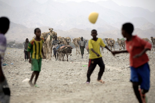 Young boys play football in the foreground while a camel caravan approaches the salt market in northern Afar region of Ethiopia on 27 March 2017. (Photo by Zacharias Abubeker/AFP Photo)