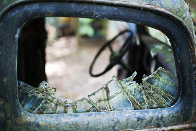 Broken glass remains on a car at Old Car City, the world's largest known classic car junkyard Thursday, July 16, 2015, in White, Ga. The owner stopped selling parts about six years ago when he realized he could sustain the business more as a museum, charging $15 for visitors just looking, and $25 for photographers. (Photo by David Goldman/AP Photo)