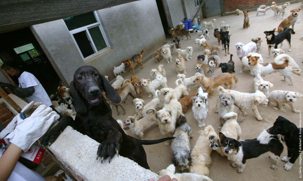 Homeless Animals Rescue Center In Nanjing