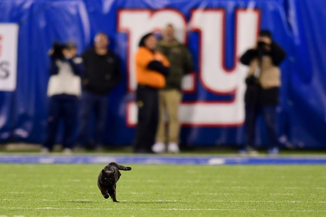 A black cat runs on the field during the second quarter of the New York Giants and Dallas Cowboys game at MetLife Stadium on November 04, 2019 in East Rutherford, New Jersey. (Photo by Emilee Chinn/Getty Images)