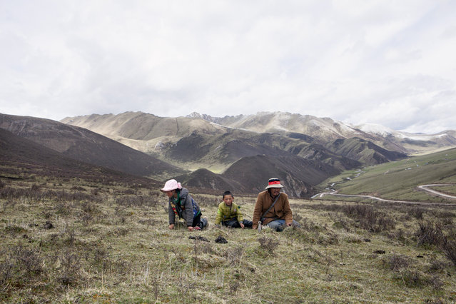 A Tibetan family  on the mountains in the surroundings of Xiaosumang Township, during the harvest of the prized Caterpillar Fungus on May 31, 2016. (Photo by Giulia Marchi/The Washington Post)