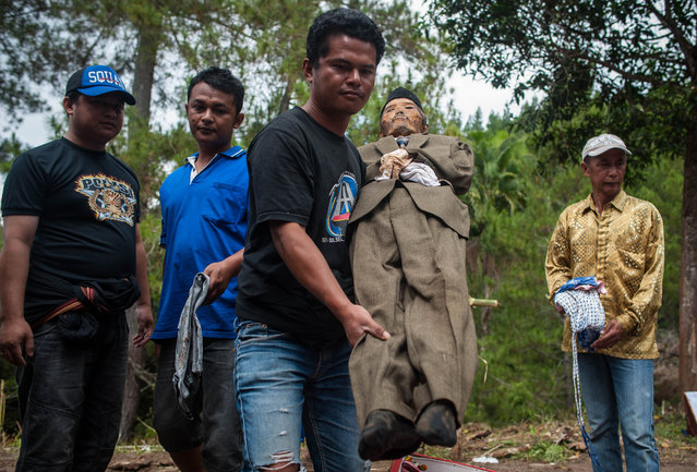 "Herman Tandi (32) exhumes the body of his grandfather Jesaya Tandibua during the Ma'nene ritual at Panggala Village on August 26, 2016 in Toraja, Indonesia. The Ma'nene ritual in performed during a ceremony every three years, where the dead are exhumed for a change of clothes, among the people of Toraja as an expression of the love of the surviving family. The Ma'nene festival began in the village of Baruppu more than a century ago. The vast majority of the 650,000 Torajan people are Christian or Muslim but a small number still practice ""Aluk Todolo"", or ""the Way of the Ancestors"". The funeral ritual is one of the most important and expensive events for these communities and some Torajans save money their entire lives for a decent burial. Some funerals are held years after someone died so their family can give them an extravagant send off into the afterlife, known to them as ""Puya"". Relatives are known to fall into debt paying for the funeral, which they believe strengthens the bond between the living and the dead. (Photo by Sijori Images/Barcroft Images)"