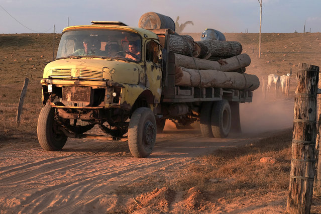 A truck laden with logs travels in Araribóia Indigenous Reserve, Maranhão, Brazil on August 7, 2015. Loggers have been stealing hardwood trees from indigenous lands in Brazil. The Guardians of the Forest are an armed militia formed by the Guajajara tribe to protect their reserve. (Photo by Bonnie Jo Mount/The Washington Post)