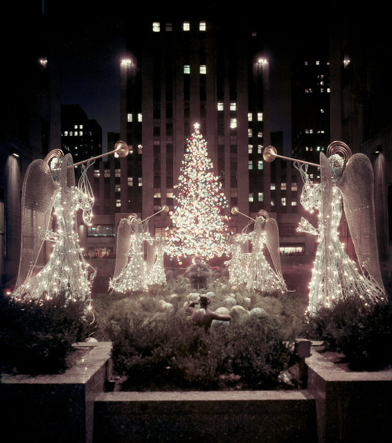 This is a night view of the famous christmas tree at Rockefeller Center, seen through the Channel Gardens from Fifth Avenue, in December 1955. (Photo by AP Photo)