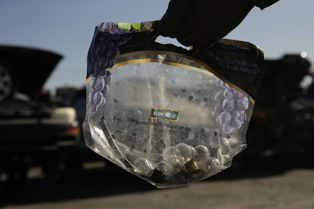 In this Wednesday, November 11, 2015 photo, a man shows a bag containing light bulbs he pulled from junk cars at Aadlen Brothers Auto Wrecking, also known as U Pick Parts, in the Sun Valley section of Los Angeles. (Photo by Jae C. Hong/AP Photo)
