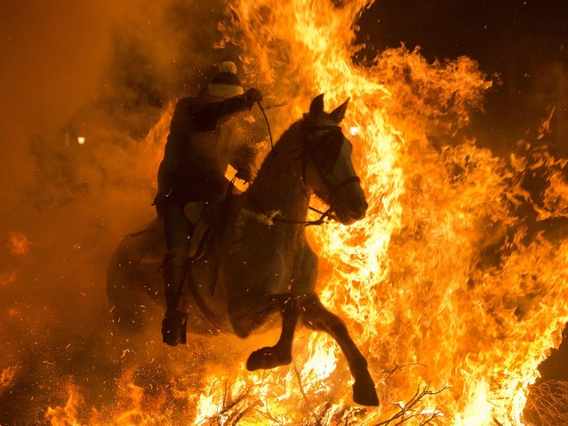 """A horseman jumps over a bonfire in the Spanish central village of San Bartolome de Pinares in the province of Avila, Castile and Leon, during the opening of the traditional religious festival """"Luminarias"""" in honour of San Antonio Abad (Saint Anthony), patron saint of animals, on January 16, 2016. (Photo by Pierre-Philippe Marcou/AFP Photo)"""