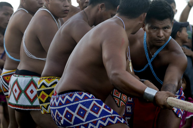 In this November 25, 2018 photo, Embera indigenous men participate in the tug-of-war competition during the second edition of the Panamanian indigenous games in Piriati, Panama. The Embera won the tug-of-war competition. (Photo by Arnulfo Franco/AP Photo)