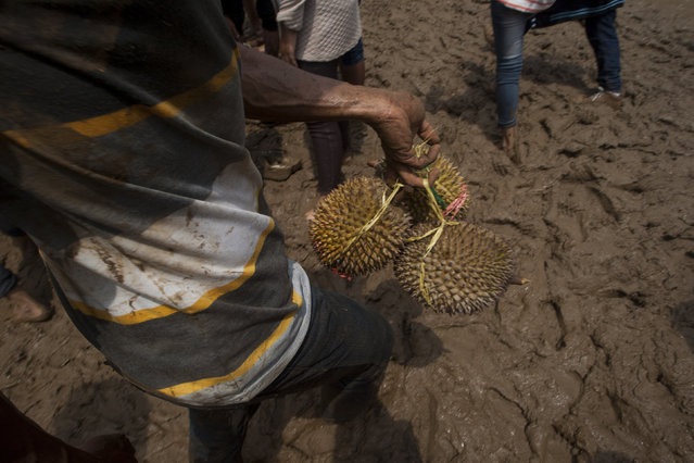A man carries durians during festival durian at northern slopes of Mount Arjuna in East Java. (Photo by Sigit Pamungkas/JG Photo)