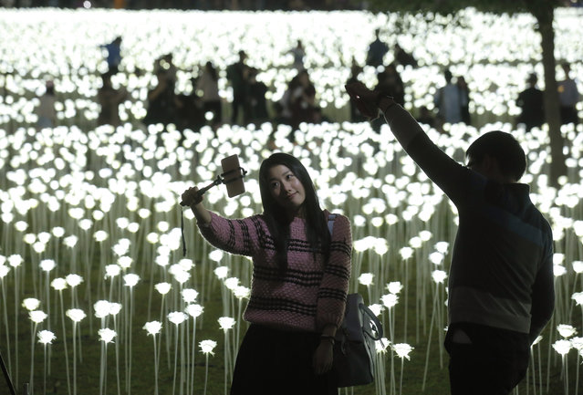 """A woman takes a selfie in front of the LED lights roses at the """"Light Rose Garden"""" in Hong Kong, Saturday, February 13, 2016. """"Light Rose Garden"""" is originated from South Korea, an art installation project featuring 25,000 white roses made of LED lights for Valentine's Day. (Photo by Kin Cheung/AP Photo)"""