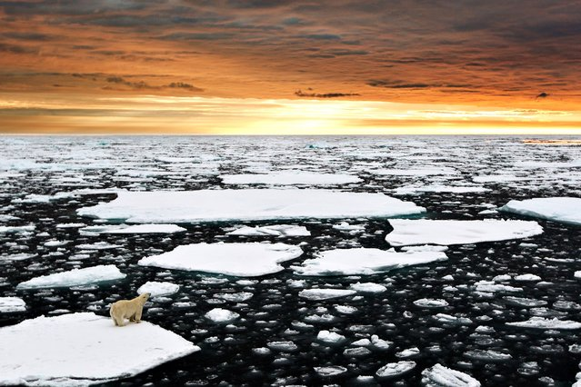 The loney polar bear pictured against a magnificent arctic sunset) This breath taking photograph captures a day in the life of a lonely polar bear. (Photo by Caters News)