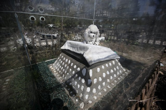 A dog doll is placed on the tomb of a pet dog ahead of the Qingming Festival at Baifu pet cemetery on the outskirts of Beijing, China March 26, 2016. (Photo by Jason Lee/Reuters)
