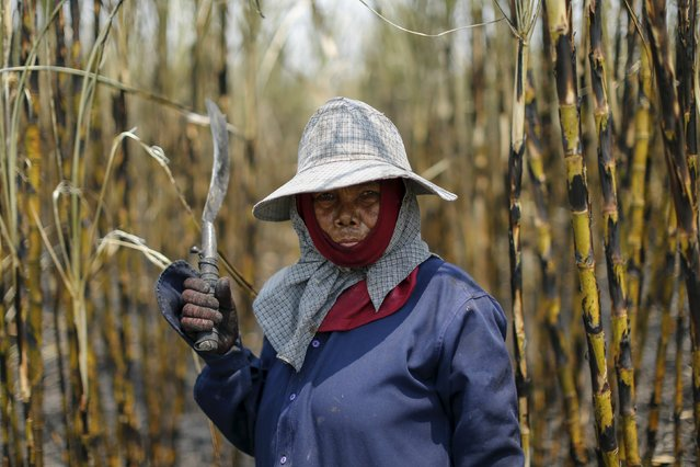 A sugar cane worker poses while working in a field at Pakchong district in Ratchaburi province, Thailand March 22, 2016. (Photo by Jorge Silva/Reuters)