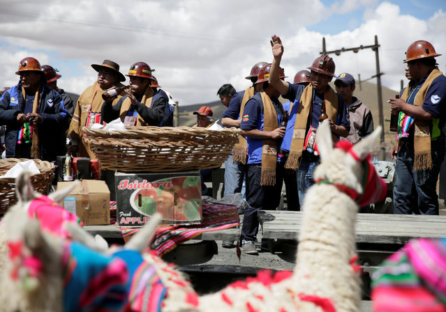 Llamas sit as independent miners bless the mine by offering animal sacrifice as part of Andean carnival celebrations, outside the Mina Itos on the outskirts of Oruro, Bolivia February 24, 2017. (Photo by David Mercado/Reuters)