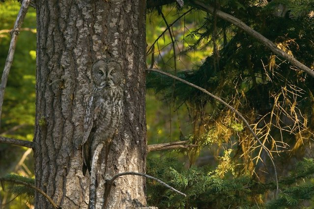 Twit twoo: An owl is hiding somewhere in the picture. (Photo by Caters News)
