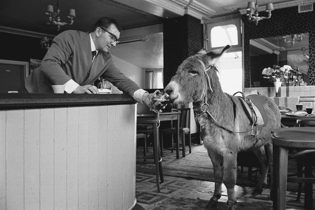 A publican serves a glass of stout to a donkey in the East End of London, 1960s. (Photo by Steve Lewis/Getty Images)