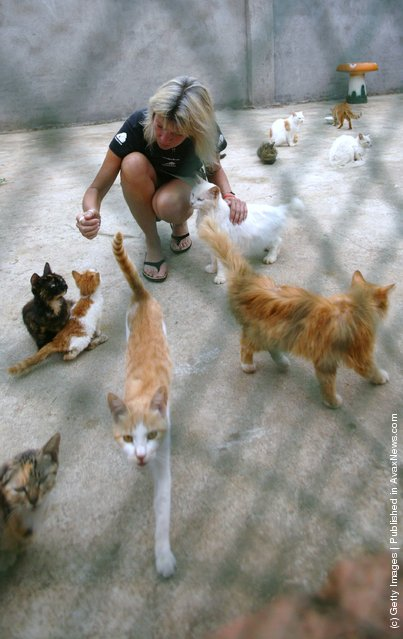 Stray cats at the 'Ping An A Fu' (safe and happy) Homeless Animals Rescue Center in Nanjing