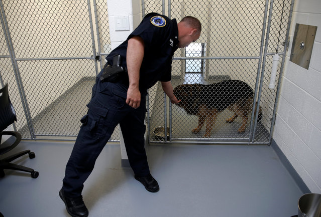 Metropolitan Transit Authority (MTA) Police Officer Nelson Hernandez interacts with his K-9 partner Geo, a long haired German Shepherd, in the kennel area of the new MTA Police Department Canine Training Center in Stormville, New York, U.S., June 6, 2016. (Photo by Mike Segar/Reuters)
