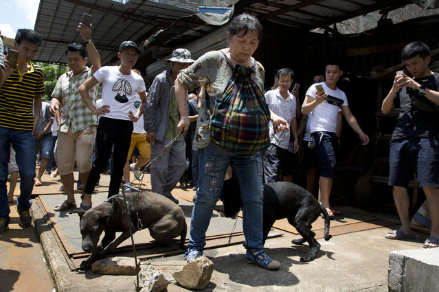 An animal rights activist, center, carries dogs away from a market after she bought from dog sellers during a dog meat festival in Yulin in south China's Guangxi Zhuang Autonomous Region, Tuesday, June 21, 2016. (Photo by Andy Wong/AP Photo)