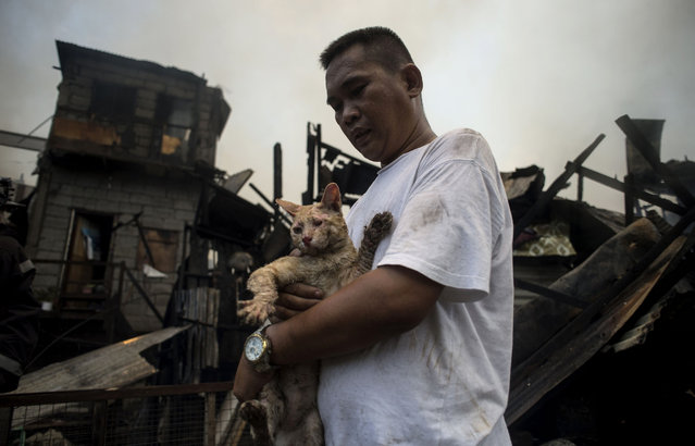 A man rescues his cat after a fire engulfed an informal settlers area beside a river in Manila on August 11, 2017. Fires are common hazards in the sprawling capital, where millions live in hovels made of scrap wood and cardboard and fire safety regulations are rarely imposed. (Photo by Noel Celis/AFP Photo)