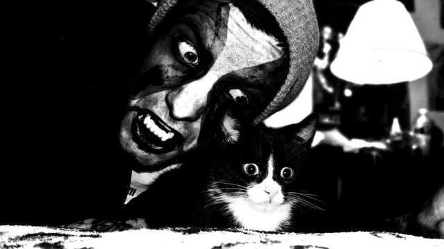 Metal Cats By Alexandra Crockett