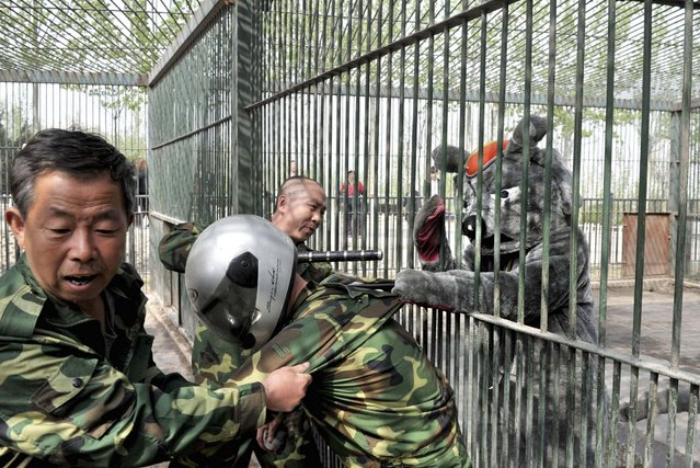 Staff take part in a preventive exercise against animal escape in order to enhance its capability of emergency handling at a Zoo in Taiyuan, Shanxi province, China, on April 17, 2013. (Photo by Reuters/China Daily)