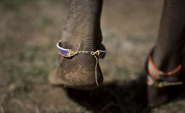 A Maasai warrior's feet touch down to the ground as he competes at the high jump, in which athletes must touch a high line with the top of their heads, at the annual Maasai Olympics in the Sidai Oleng Wildlife Sanctuary near to Mt Kilimanjaro, in southern Kenya Saturday, December 13, 2014. (Photo by Ben Curtis/AP Photo)
