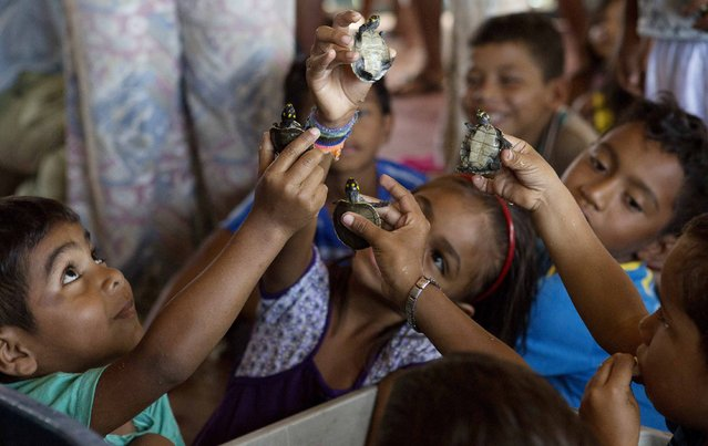 Children play with quelonios turtle hatchlings before they are released, by members of the Pe-de-Pincha project, into a lake of the Igapo-Acu community in the Amazon municipality Careiro, February 5, 2015. (Photo by Bruno Kelly/Reuters)