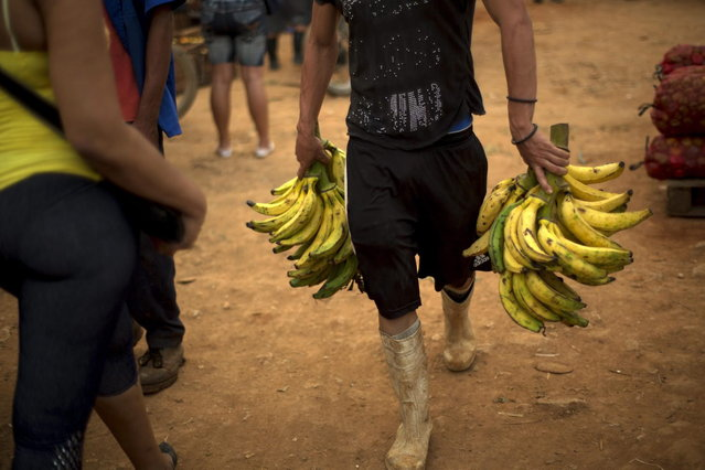 In this September 30, 2013 photo, a farmer sells bananas at the 114th Street Market on the outskirts of Havana, Cuba. The market s bustle is a result of economic reforms begun in 2010 by President Raul Castro, which includes relaxing rules on private farming. (Photo by Ramon Espinosa/AP Photo)