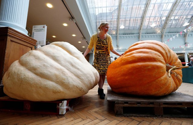 Amber Alferoff  inspects pumpkins on display as part of the RHS Giant Pumpkin Competition at the RHS London Harvest Festival held at Lindley Hall, London, on October 8, 2013. (Photo by Jonathan Brady/PA Wire)