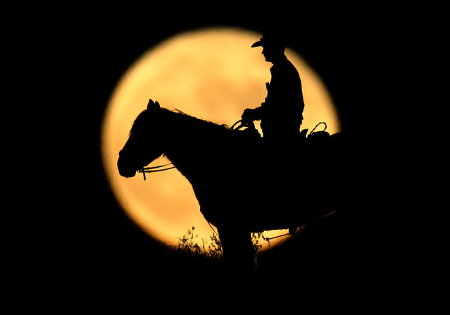 A full moon rises behind U.S. Border Patrol agent Josh Gehrich as he sits atop a hill while on patrol near Jacumba, California, U.S., November 14, 2016. (Photo by Mike Blake/Reuters)