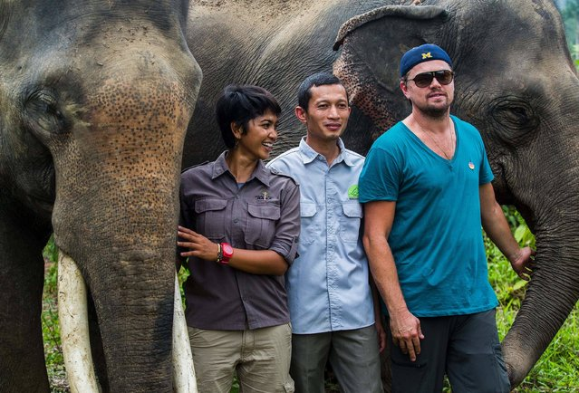 This handout picture taken on March 26, 2016 and released on March 29, 2016 by the Foundation of Forest, Nature, and Environment of Aceh, shows Oscar-winning actor Leonardo DiCaprio (R) poses with elephants as he visits Leuser National Park in Aceh province. Oscar-winning actor Leonardo DiCaprio has visited the Indonesian jungle to help protect a biodiverse area from deforestation. Fresh from clinching his long-awaited first Oscar last month, DiCaprio spent the weekend in the Leuser ecosystem, on Indonesia's main western island of Sumatra. (Photo by AFP Photo/Stringer)