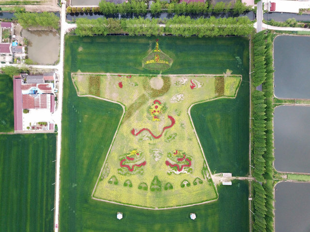 Aerial view of a cole flower field painting featuring imperial dragon robe at a village on April 6, 2019 in Nanjing, Jiangsu Province of China. (Photo by Costfoto/Barcroft Images)