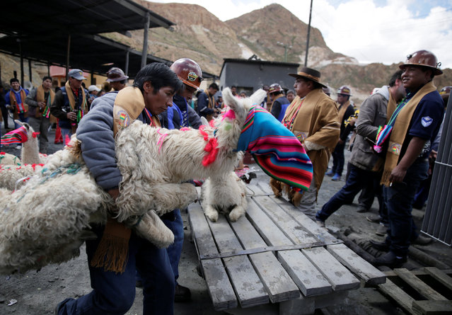 An independent miner holds a Llama to sacrifice to have good fortune during the year as part of Andean carnival celebrations, outside the Mina Itos on the outskirts of Oruro, Bolivia February 24, 2017. (Photo by David Mercado/Reuters)