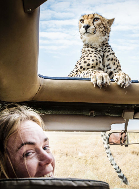 Photographer Bobby-Jo Clow with the Cheetah resting on the roof. (Photo by Bobby-Jo Clow/Caters News)