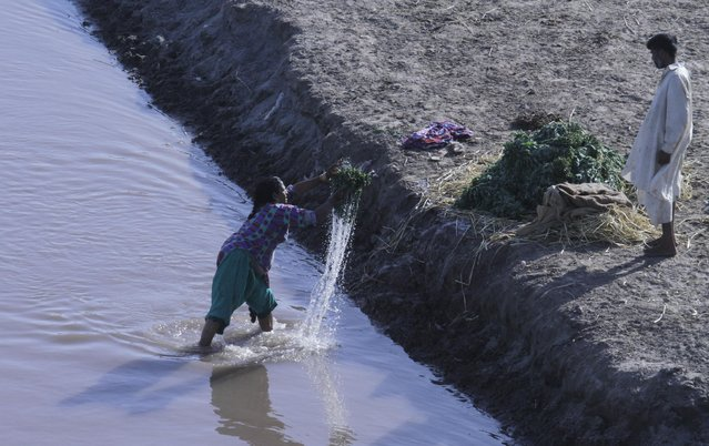 A Pakistani woman washes vegetables with a polluted water at a canal in Lahore, Pakistan, Tuesday, April 21, 2015. (Photo by K. M. Chaudary/AP Photo)
