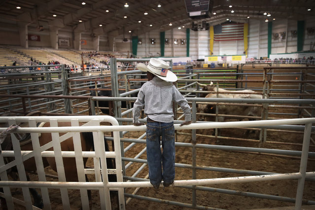 Harold Williams Jr., 4, watches activity in the arena before the start of competition at the Bill Pickett Invitational Rodeo on March 31, 2017 in Memphis, Tennessee. (Photo by Scott Olson/Getty Images)