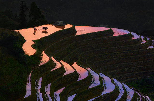 """""""Sunset in Longji"""". Taken end of afternoon in the wonderful place call Longji rice field terrace in Guangxi Province. Photo location: China. (Photo and caption by Thierry Bornier/National Geographic Photo Contest)"""